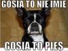 gosia8