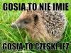 gosia9
